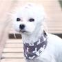 COSCA02 dog4