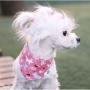 COSCA02 dog